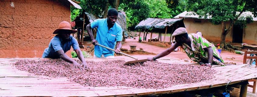 Drying Cocoa Farm Model