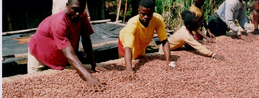 Capacity Building on Price Risk Management Strategy for Cocoa Smallholder Farmers in Africa